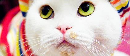 human cat psychology  cats improve  mood
