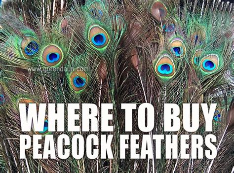 Where To Buy Peacock Feathers In Malaysia  Green Daun. 0 Interest Transfer Credit Cards. How To Get Approved For Auto Loan. Window Treatment Installation Price List. Auto Repair Businesses What Is Notice Of Levy. Schizophrenia Physical Symptoms. Customizable Credit Cards Free Business Mail. Cheap Car Insurance For Young Drivers. Car Rental Paris France Tender Lump In Breast