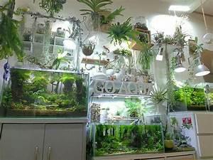 Pflanzen Terrarium Einrichten : i don 39 t know what board to put his under home inspirations aquascaping many facets of my ~ Orissabook.com Haus und Dekorationen