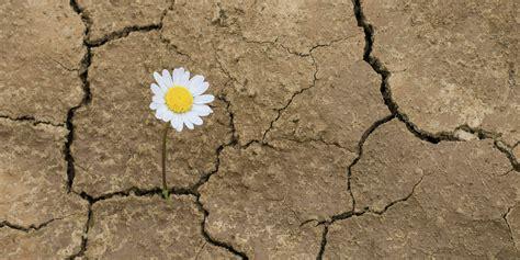 Autismo y el desarrollo de la resiliencia - Autismo Diario