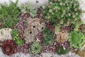 Winterharte Pflanzen Liste : winterharte steingartenpflanzen liste der mehrj hrigen sorten ~ Eleganceandgraceweddings.com Haus und Dekorationen