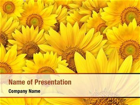 sunflower powerpoint templates sunflower powerpoint