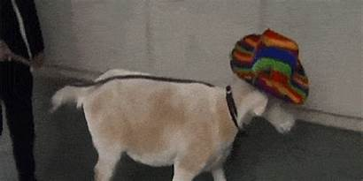 Animal Gifs Funny Hilarious Culture Center