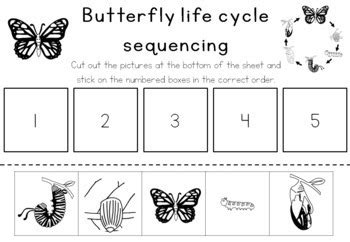 butterfly cycle sequencing activity worksheet by