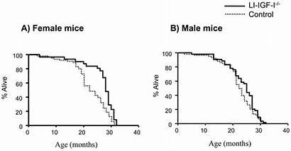 Span Igf Li Mice Female Increased Mean