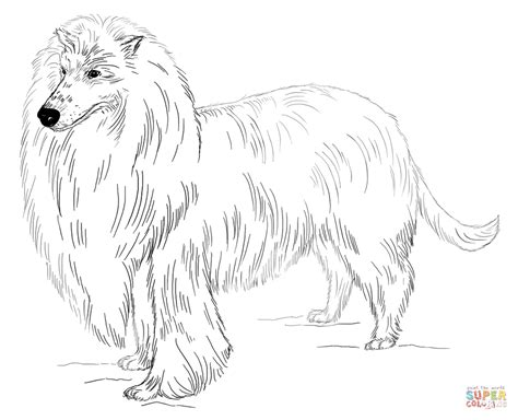 long haired collie coloring page  printable coloring pages