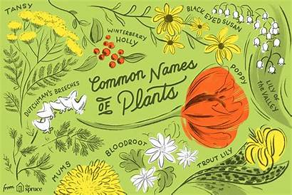 Common Names Plants Plant Trees Thespruce Shrubs