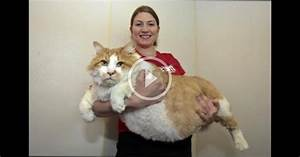 Fattest Cat in the World! | WBMPlay 2004214228