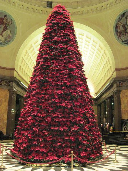 weihnachtsbaum aus  weihnachtssternen wiesbaden