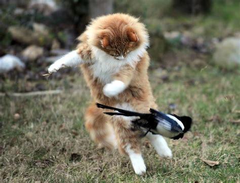 10 grau teal warrior cats welche katze bist du