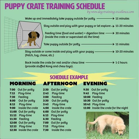 best 25 puppy schedule ideas on goldendoodle puppy care and puppy