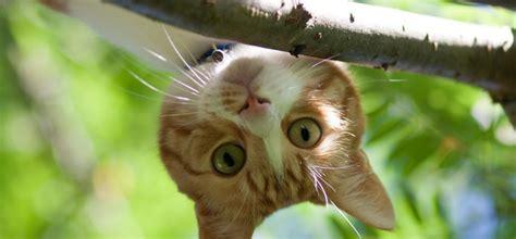 Tests: Cik labi tu pazīsti kaķus? - Whisker