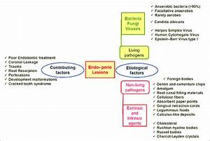 Etiological And Contributing Factors In Endo