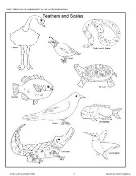 animal body coverings by evan moor educational publishers