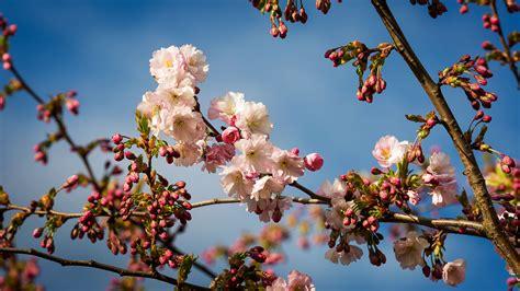 MM Foto » Pavasaris Rīgā