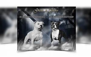 Business Carads Breeder Webdesign Dog Kennel Design Best Dog Breeder