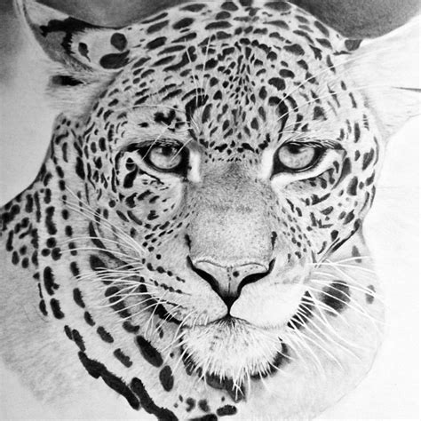 hyper realistic animal drawing  gallerydeceylon
