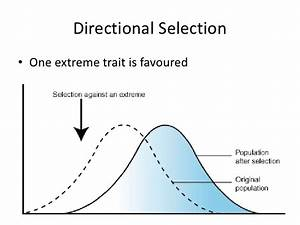 What Are Some Examples Of Directional Selection