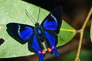 TOP 10 MOST BEAUTIFUL BUTTERFLIES OF THE WORLD