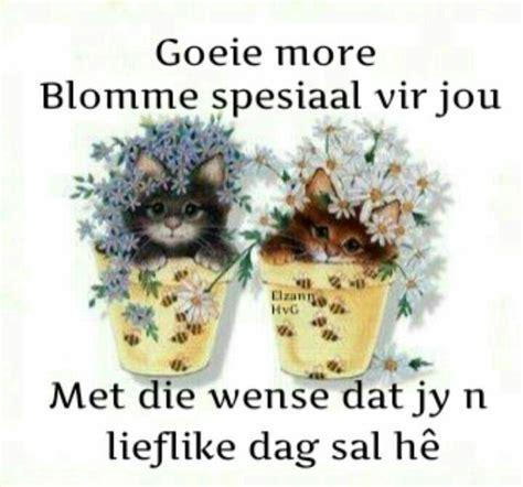 36 best about blommetjie vir jou on kittens flower and tatty teddy