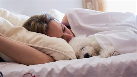 Women Sleep Better When They Share Beds With Dogs