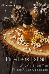 Pine Bark Extract Benefits As A Super Antioxidant