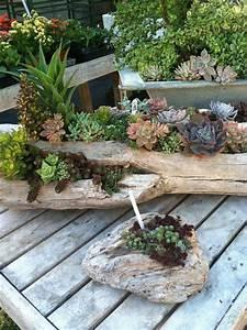 Ou Acheter Du Lubrifiant : d co bois flott et plantes succulentes avec des troncs d ~ Dailycaller-alerts.com Idées de Décoration