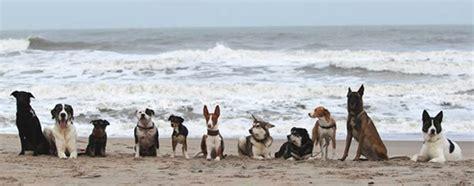 Hunde Dänemark Urlaub