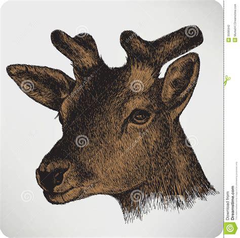 animal deer  horns hand drawing stock photography