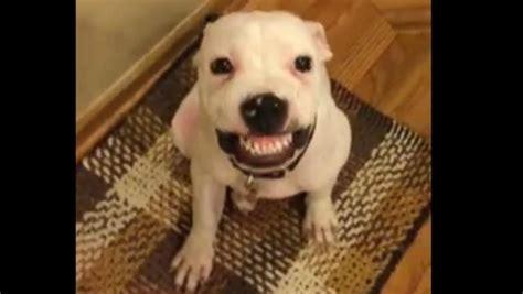 meet  dog  smiles   hears  cheese