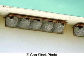 Nid De Guepe Dans Le Toit : nid frelons surplomb toit sous coup grand nid toit images rechercher photographies ~ Medecine-chirurgie-esthetiques.com Avis de Voitures