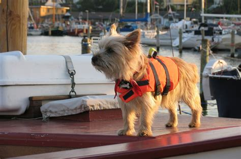 Salty Dog Boat Name by 6 Salty Safety Tips For Your Dog On A Boat