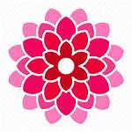 Flower Icon Pink Dahlia Bloom Icons Editor