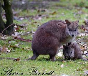 Online Diet Planner Parma Wallaby Animal Experiences At Wingham Wildlife