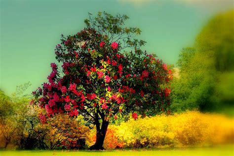 Beautiful Tree Wallpaper For Desktop by Beautiful Tree Wallpapers Wallpaper Cave