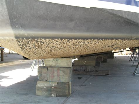 Barnacles On Boats by Anti Fouling Your Boat Everything You Need To