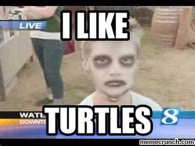 I Like Turtles Meme - i suck at math please help me solve this simple problem lavender room slowtwitch forums