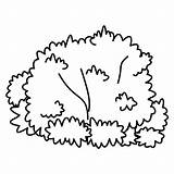 Bush Coloring Bushes Drawing Clipart Outline Pages Plants Clip Shrubs Kid Tree Downloads Cartoon Easy Template Fungi Cliparts Fensterbilder Malvorlagen sketch template