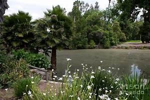 baldwin lake los angeles county arboretum and botanic With los angeles county arboretum and botanic garden