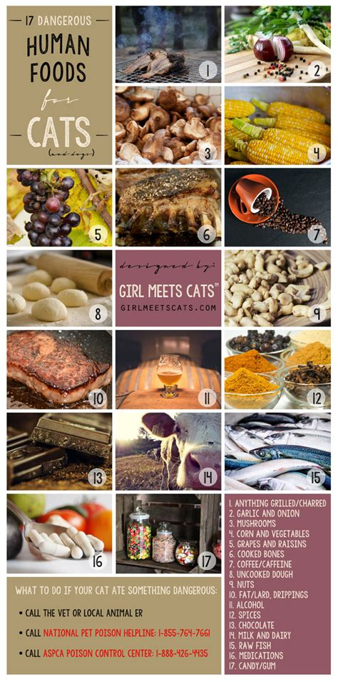 dangerous  toxic foods  cats  dogs