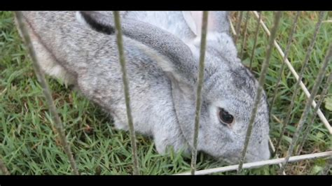 which rabbit breeds make the best pets small pets youtube