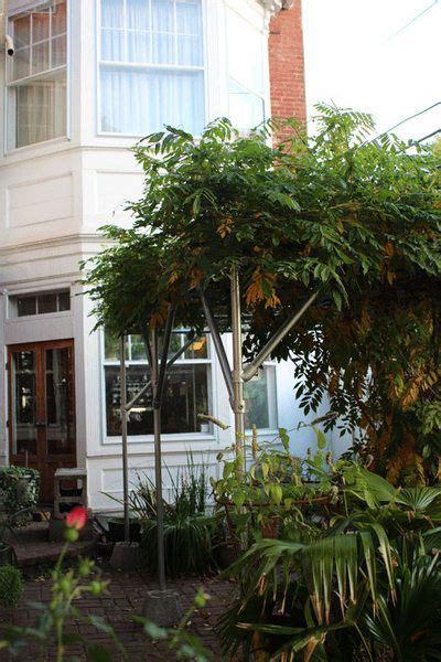 wisteria support idea gardening pinterest diy table