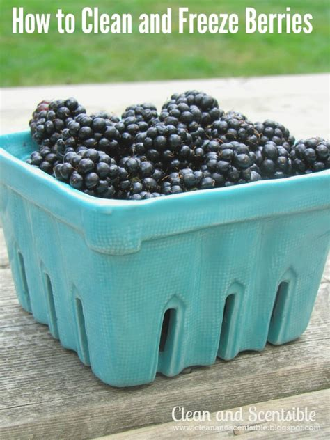 how to wash blueberries how to clean and freeze berries clean and scentsible