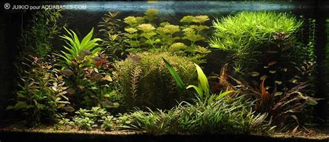 les plus beaux aquariums index page principale