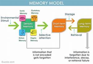 Understanding The Difference Between Iconic And Echoic Memory