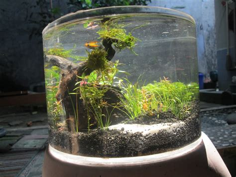 aquaplantarium tips  membuat nano aquascape
