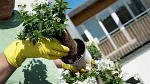 Balkonblumen Richtig Pflanzen : garten tiere pflanzen b z berlin ~ Frokenaadalensverden.com Haus und Dekorationen