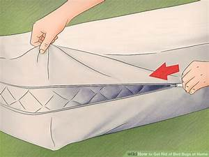 how to get rid of bed bugs in 4 easy steps autos post With how to get rid of bed bugs in sofa