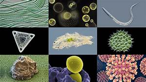 Microbiology, From, A, To, Z, Explained, -, Micropia