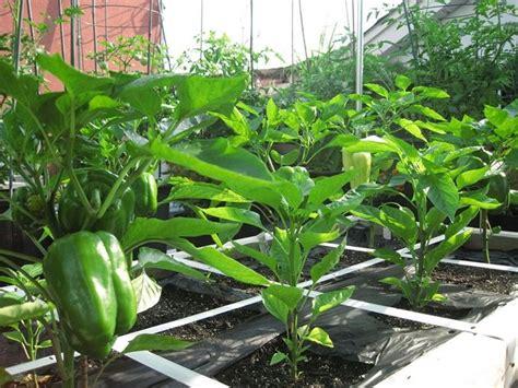 orto sul terrazzo contenitori orto nel terrazzo orto in balcone come coltivare orto